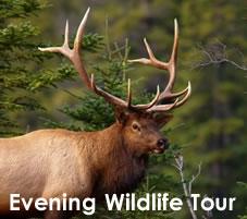Evening Wildlife Tour