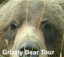 Grizzly Bear Tour