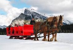 Sleigh Rides in Banff